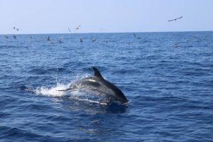 Круиз с китами и дельфинами на тенерифе