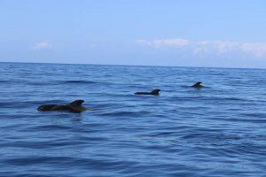 Круиз с китами и дельфинами на лодке