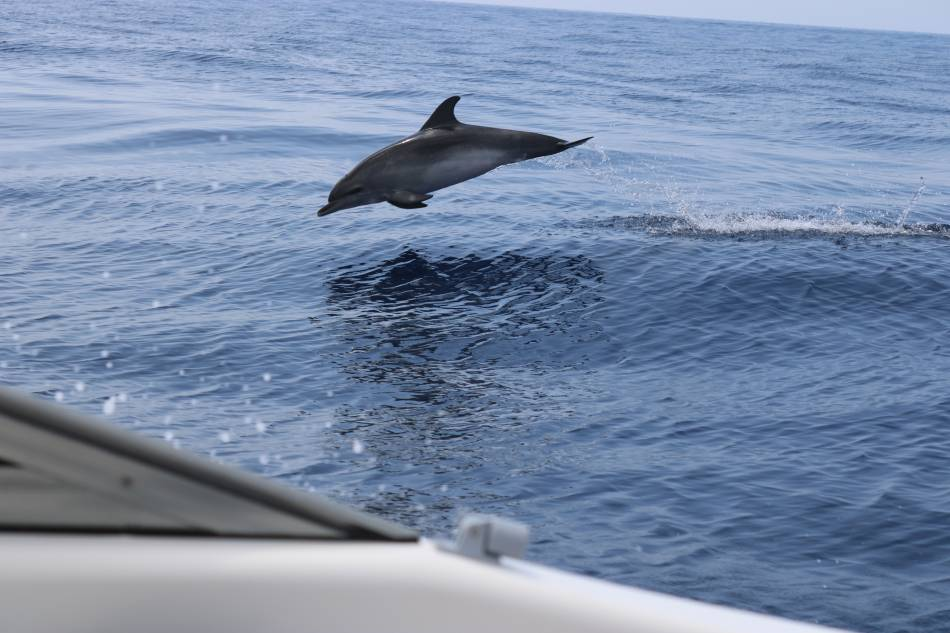 круиз с китами и дельфинами