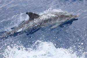 Круиз с китами и дельфинами на воде