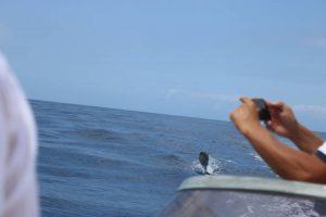 Круиз с китами и дельфинами яхта