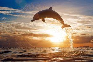 круиз с дельфинами и китами
