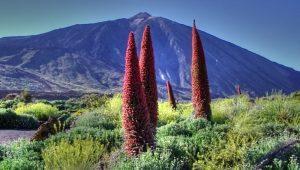 Национальный парк Каньядас-дель-Тейде