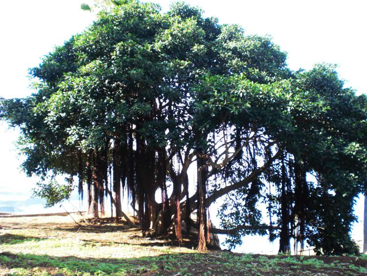 Уникальная вилла архитектора уникальные деревья