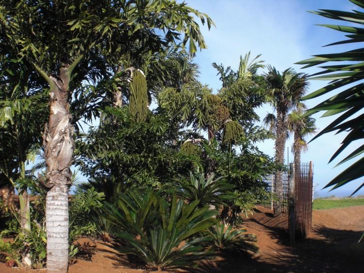 Уникальная вилла архитектора пальмы